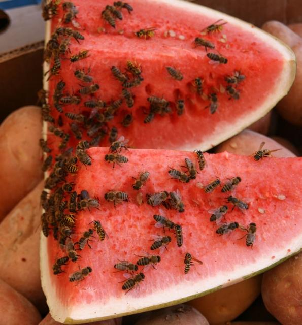 Sacrifial Watermelon