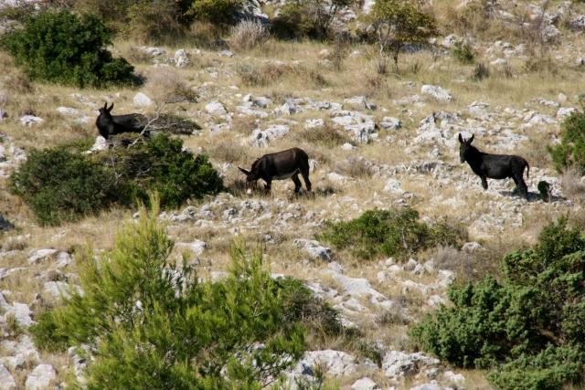 Wild Donkeys